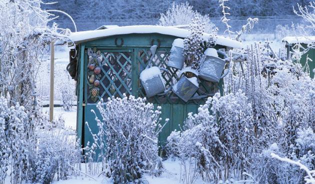Moestuin in de winter