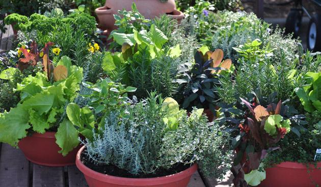 Mest Voor Tuin : 4 voedingstips voor je pottentuin u2013 de tuin op tafel