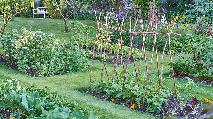 Starten met een moestuin de tuin op tafel for Groenten tuin