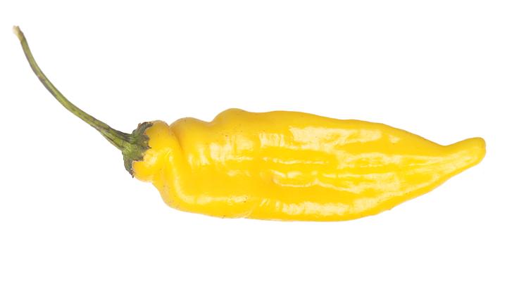 Lemon drop peper