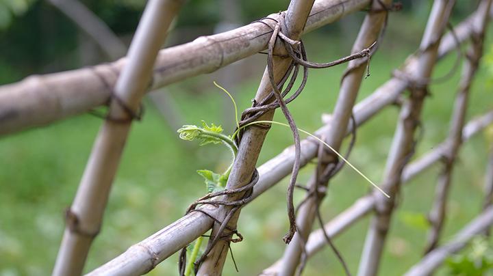 klimmen bamboestok