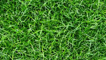 Gras als mulch