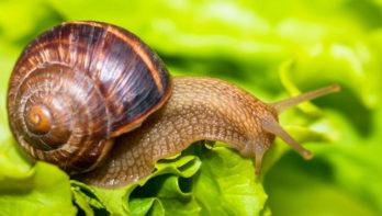 10 tips tegen slakkenplagen