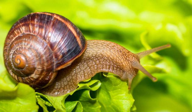 10 tips tegen een slakkenplaag