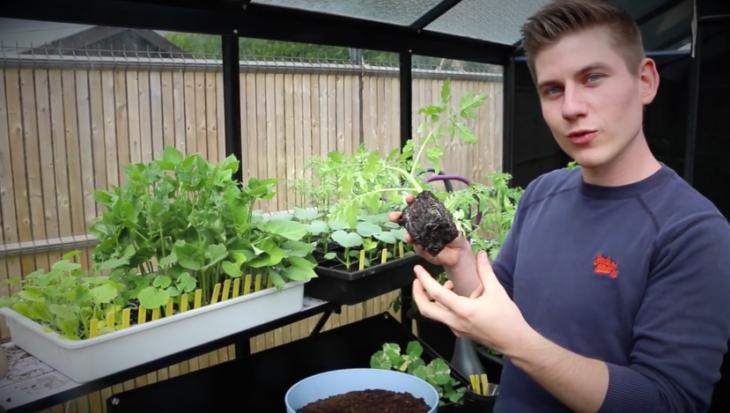 Tomaten planten in pot