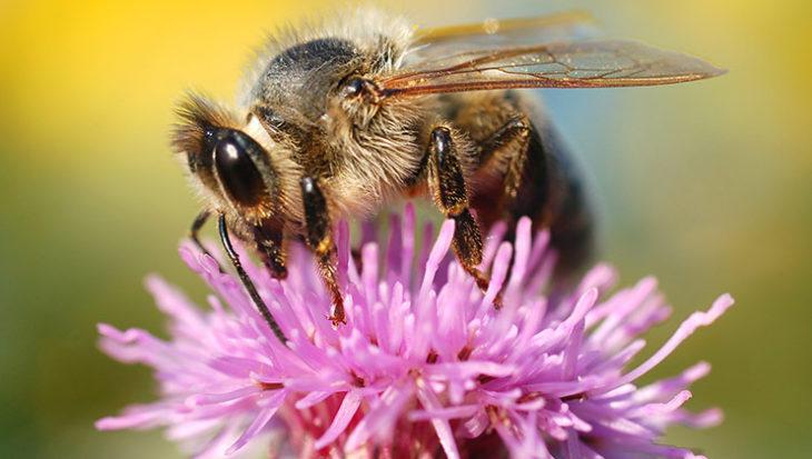 Tips voor blije bijen in de tuin