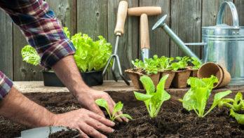 6 tips om sla te kweken