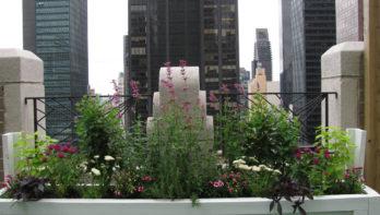 Rooftopgardens New York!