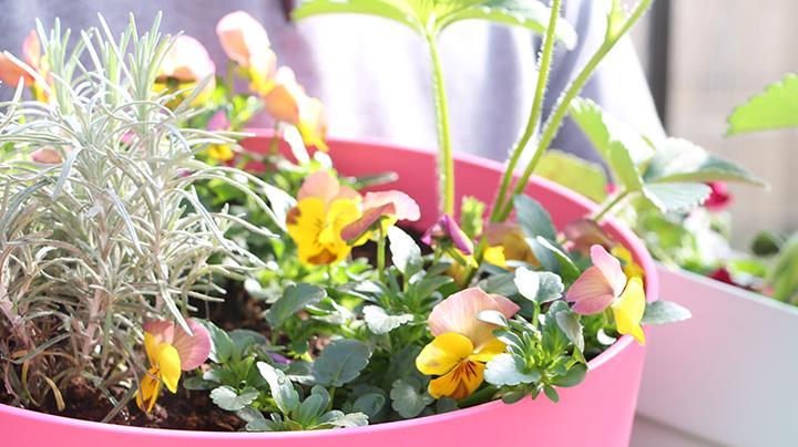 Kruiden- en bloemen combi