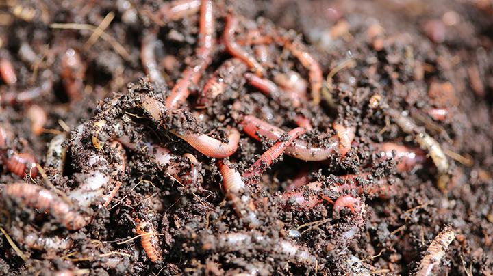 Daarom zijn wormen goed voor je bodem