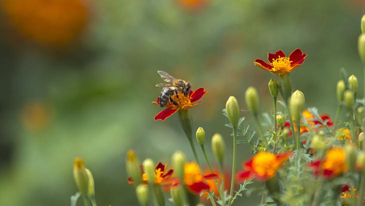 Tips voor een bijvriendelijke tuin