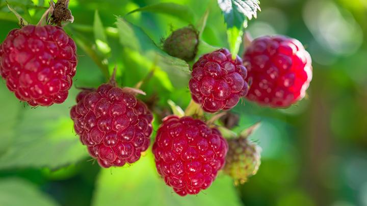 Fruit voor dummies