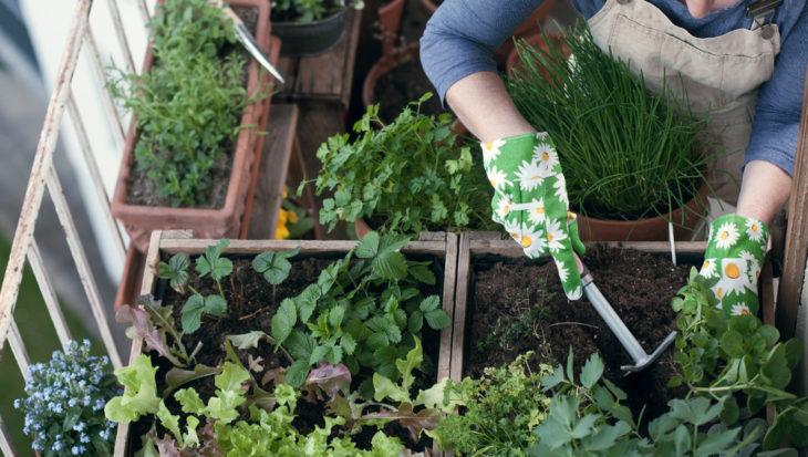 In de stad tuinieren met een balkonkas