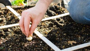Tips bij het aanleggen van een tuin