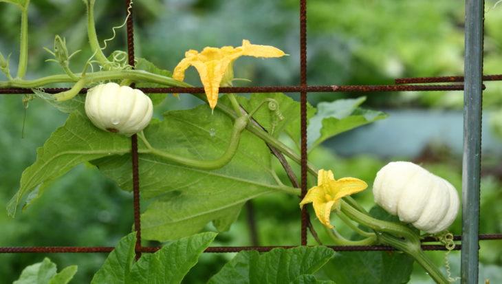 Verticale groenten voor de moestuin