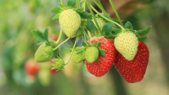 Tuinklussen in mei: oogst beschermen, onkruid weghalen én meer!