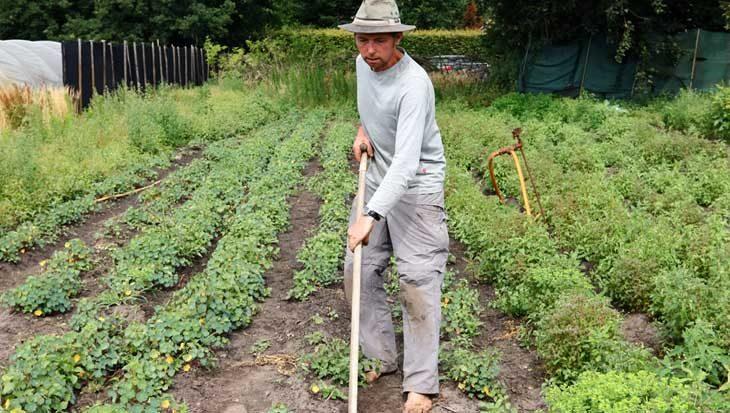 Kweken op de grond van Vincent van Gogh